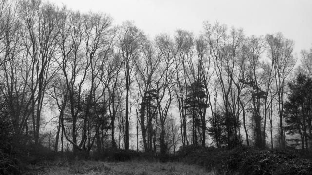 treestatt